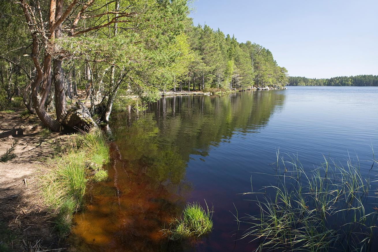 Loch Garten - Scotland