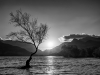 Lone Tree, Lake Padarn